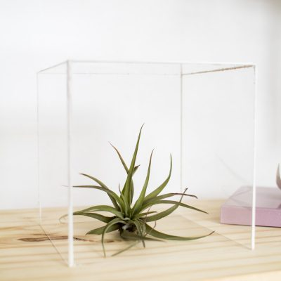 DIY Air Plant Display Box
