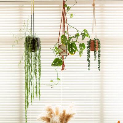 DIY Raffia Hanging Planter Kit
